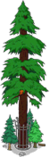 World's Largest Redwood Level 8