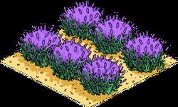 Lavender Field Menu