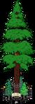 World's Largest Redwood Level 9