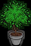 Ficus Plant Menu