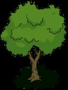 Tree01 transimage