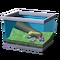 Подсолнечная лягушка