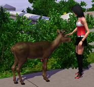Petting deer