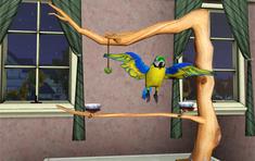 Маленький питомец сине-желтый ара