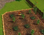 Bachelor Home Garden