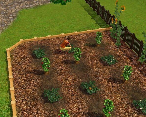 File:Bachelor Home Garden.jpg