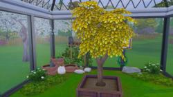 TS4 Денежное дерево в саду