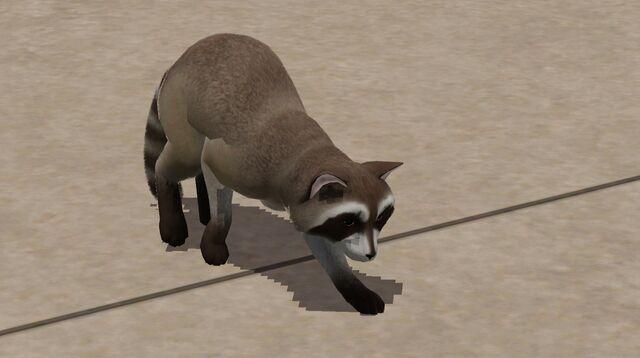 File:Raccoon on sidewalk.jpg