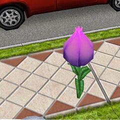 Flor de hada morada