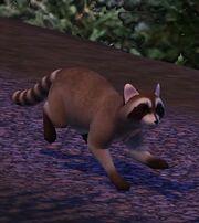 Raton laveur (Les Sims 3)