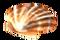 Морской гребешок (оранжевый)