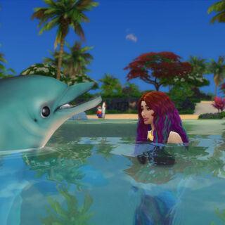 Delfín azur