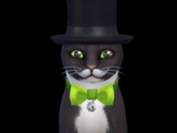 Mayor Whiskers