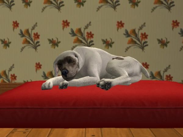 File:Ponch sleeping.jpg