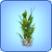 Planta cristal