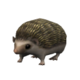 Pygmie Hedgehog