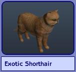 Exotic Shorthair (Sims 2)