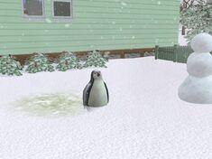 Penguin plump
