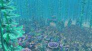 Русалочий грот кораллы