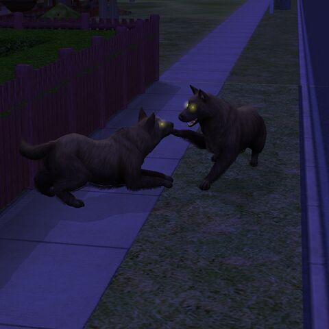 Dos líderes de la manada jugando.
