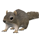 File:Squirrel.png