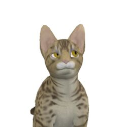 CheetahUnknownFanonStray