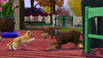 Les Sims 3 Animaux & Cie 01