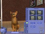 Create a Pet