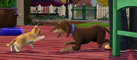 File:TS3Pets dog and cat fight.jpg