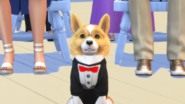 TS4 Cats and Dogs 8