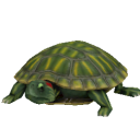 File:Red Eared Slider Turtle.png