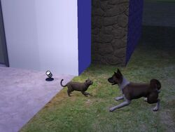 Samanta Gati jugando con un perro