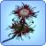 Flor muerte1