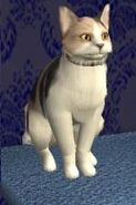 Mickey Kat