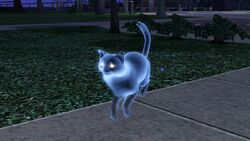 Ghost cat by cassini90125-d4t1t15-1-