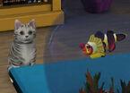 Les Sims 3 A&C 07