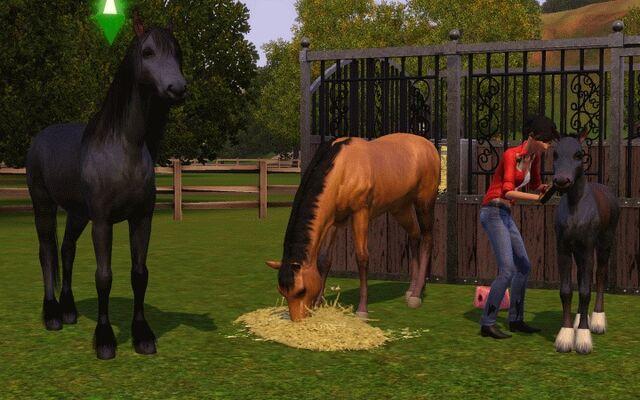 File:Horse eating hay.jpg