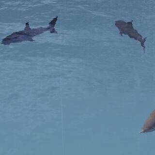 Акулы готовятся напасть на персонажа