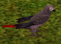 African Grey Parrot.png