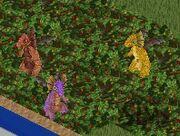 Dragons rouge jaune violet