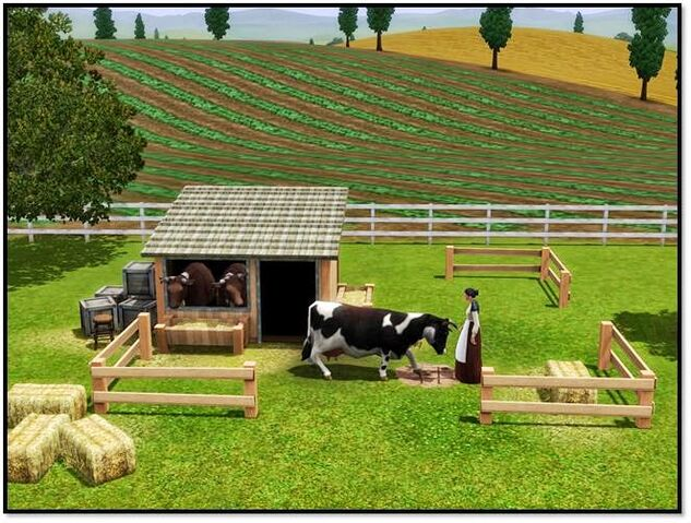 File:Cow store content 2.jpg