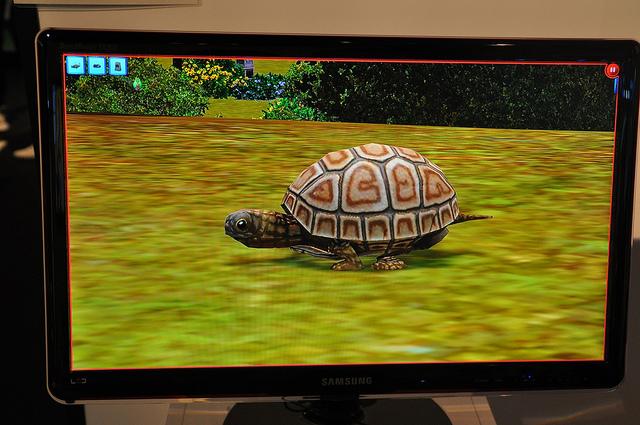 File:Turtle2.jpg