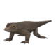 Pygmy Komodo Dragon