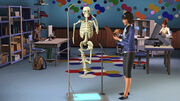 Sim skeleton