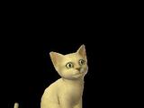 Alegra (kitten)