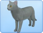 File:Breed16.png