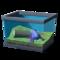 Пятнистая баклажанная лягушка