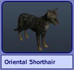 Oriental Shorthair (Sims 2)