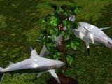 Omni plant