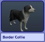 Border Collie (Sims 2)